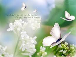flowers beautiful image of friendship free