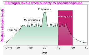 Effects Of Estrogen Women Menstrual Cycle Pregnancy
