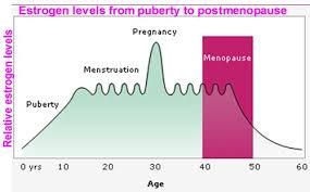 Menopause Hormone Levels Chart Effects Of Estrogen Women Menstrual Cycle Pregnancy