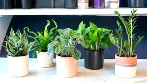 full size of low maintenance houseplants safe for dogs large hard to kill house plants snake