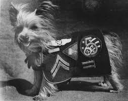 Angel in a Foxhole: Smoky The WWII Therapy Dog | Indiegogo