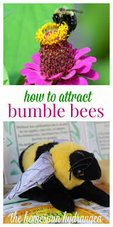 this post 12 ways to attract ble bees to your garden conns affiliate links to learn more visit my about me page