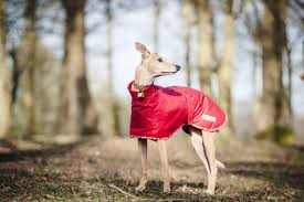 with their lean build whippets greyhounds and lurchers are sensitive to the cold and need a coat designed to fit their distinctive frames