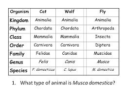 Animal Genus Chart 53 Conclusive Cat Classification Chart