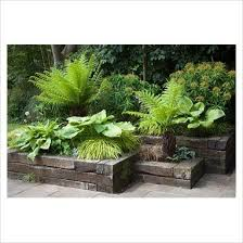 Small Picture Best 25 Tree fern ideas on Pinterest What is a fern Garden