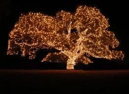 tree lighting ideas. Tree Lighting Ideas