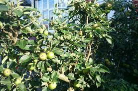 7 Best Fruit Tree Grove And Landscape Images On Pinterest Fruit Tree Hedgerow