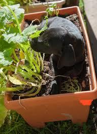 lucy my garden helper