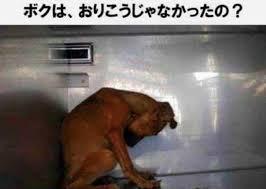 תוצאת תמונה עבור 犬 殺 処分