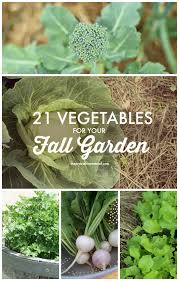 fall garden vegetables. vegetables to plant in fall garden