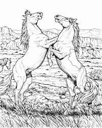 Small Picture Detailed Horse Coloring Pages For Adults Coloring Pages