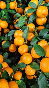 fruit wallpaper iphone. Exellent Iphone A Lot Of Orange Fruit IPhone 6 Wallpapers On Fruit Wallpaper Iphone O