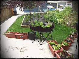 astonishing decoration backyard container vegetable garden gardening and top vegetables herbs to plant perfect home plans