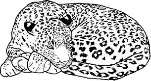 Small Picture Leopard Coloring Pages Coloring Coloring Pages