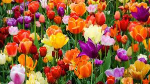 beautiful flower names
