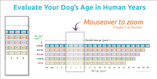 Medium Dog Age Chart How To Estimate Your Dogs Age In 5 Proven Ways