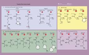 Image Result For Amino Acids Chart Amino Acids