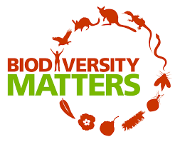 essay on the importance of biodiversity