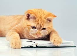 """Résultat de recherche d'images pour """"chat qui lit"""""""