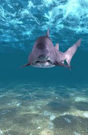 shark attack wallpaper. Plain Shark Screenshot Image In Shark Attack Wallpaper M