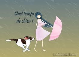 """Résultat de recherche d'images pour """"gif chien sous la pluie"""""""