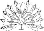 Раскраска детская птица