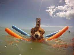 beach dog fun the best beaches in world
