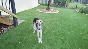 artificial grass for pets. Artificial Grass For Dogs In San Antonio Pets