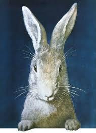 white rabbit 20175310 framed prints