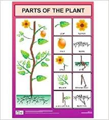 Buy Parts Of The Plant Chart For Kids Book Online At Low