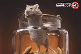 Na caixa de pesquisa, escreva resolução de problemas e, em seguida, selecione resolução de problemas. Como Pegar Um Rato Em Casa Armadilhas Como Trazer Roedores E Pegar Um Rato Em Uma Casa Sem Uma Ratoeira Maneiras Humanas De Lutar