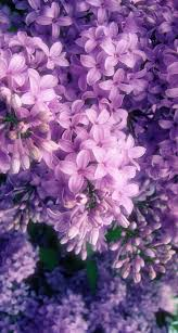 Cute Purple Aesthetic Wallpaper Flowers ...