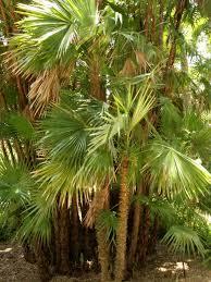 13 Classic Palm Trees Hgtv