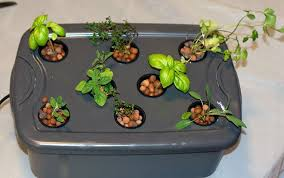 which herbs to grow