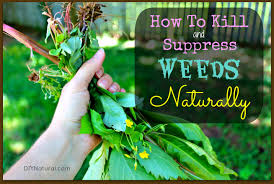 how to kill weeds in garden. how to kill and control weeds naturally in garden