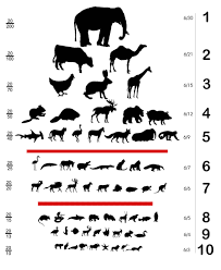 animal sizes chart animal eye chart art pinterest chart book covers and pup