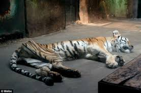Zoos are animals      prisons    plar biz Zoos are animals      prisons