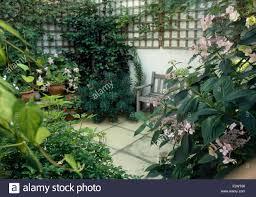 Wall Climbing Plants In Pots