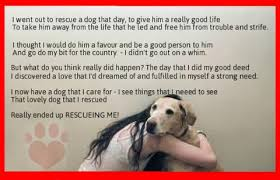 Rescue Dog Quotes Delectable Pets N More Inspiring Quotes For People Who Love Animals