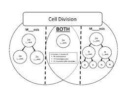 Venn Diagram Comparing Meiosis And Mitosis Mitosis And Meiosis Venn Diagram