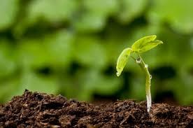 O planta noua