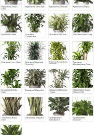 tropical indoor plants top 10 plants to improve indoor air quality garden design with indoor great house plants