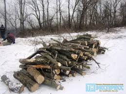 Марківським відділом Старобільської місцевої прокуратури підтримано публічне обвинувачення за фактом незаконної порубки лісу