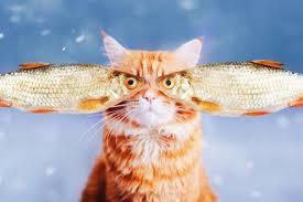 Картинки по запросу картинки анимация кот рыболов с днем рождения