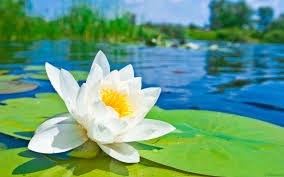 Image result for ?تصاویر متحرک گل سفید زیبا?