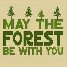 40 Famous Forest Quotes And Sayings Golfian Amazing Forest Quotes