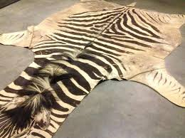 fresh faux zebra rug for home decoration accessories winsome living room decor inspiration performing cow skin