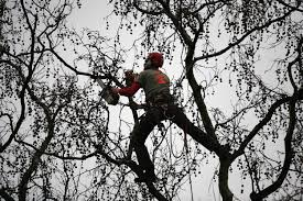 Homeowners: Be Smart, Use Common Sense When Cutting Trees or Branches  Around Electrical Wires