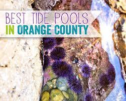 7 Family Friendly Orange County Tide Pools Popsicle Blog