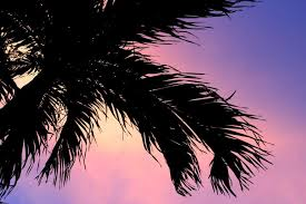 Free Stock Photo of Palm tree silhouette sunset background | Download Free  Images and Free Illustrations
